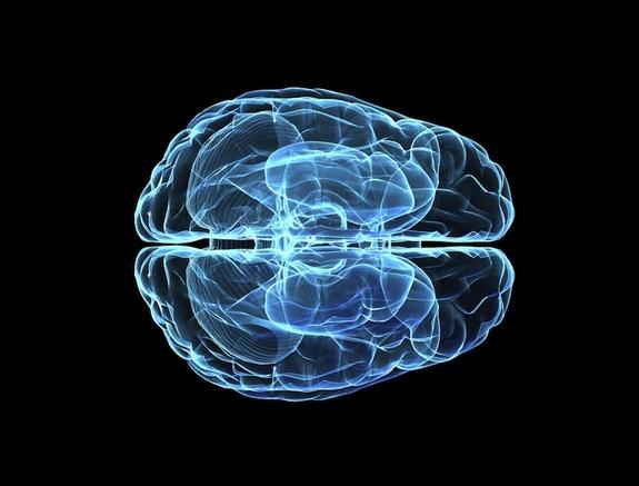 http://i.livescience.com/images/i/000/024/088/i02/brain-120131.jpg?1328054511